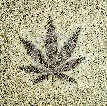 Marihuana Tax Act 1937